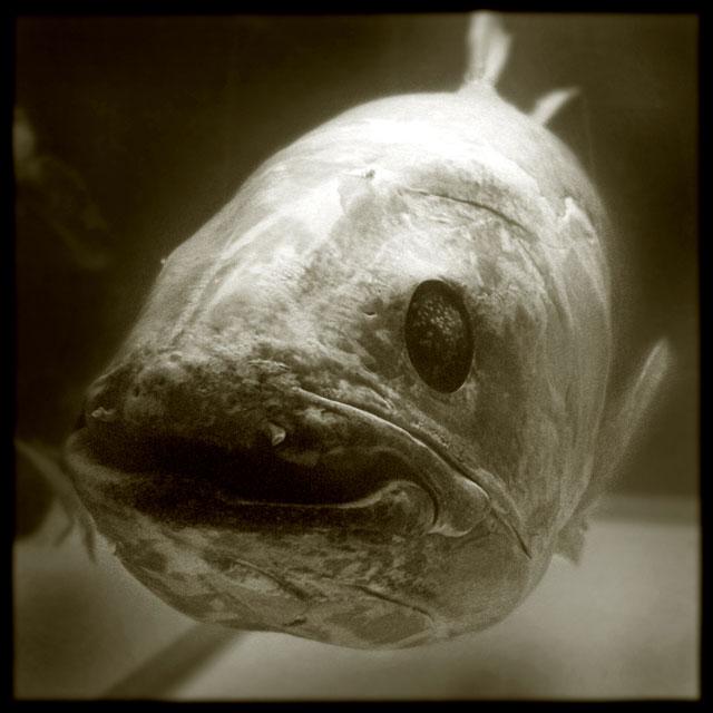 Pascal Renoux, Fish
